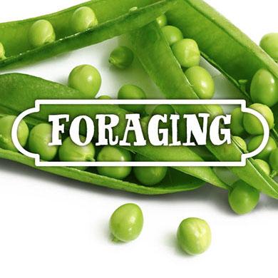 Foraging De Groene Artisanen | Green Food Catering | Bedrijfscatering